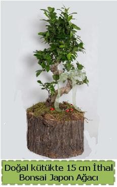 Doğal kütükte İthal bonsai japon ağacı  Kırklareli anneler günü çiçek yolla