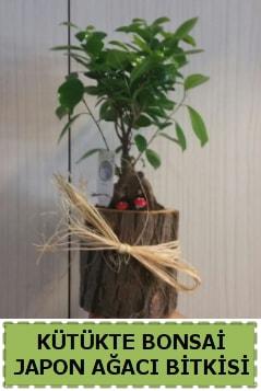 Kütük içerisinde doğal bonsai ağacı  Kırklareli hediye sevgilime hediye çiçek