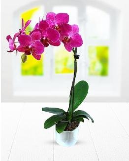 Tek dallı mor orkide  Kırklareli çiçek online çiçek siparişi