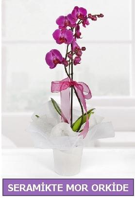 Seramik içerisinde birinci kalite tek dallı mor orkide  Kırklareli cicekciler , cicek siparisi