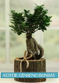 Kütük ağaç içerisinde ginseng bonsai  Kırklareli uluslararası çiçek gönderme