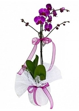 Tekli Mor Orkide  Kırklareli 14 şubat sevgililer günü çiçek