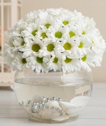 Fanusta beyaz Papatya  Kırklareli çiçek online çiçek siparişi