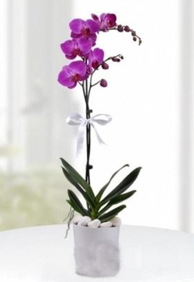 Tek dallı saksıda mor orkide çiçeği  Kırklareli çiçek yolla , çiçek gönder , çiçekçi