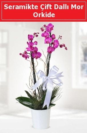 Seramikte Çift Dallı Mor Orkide  Kırklareli ucuz çiçek gönder